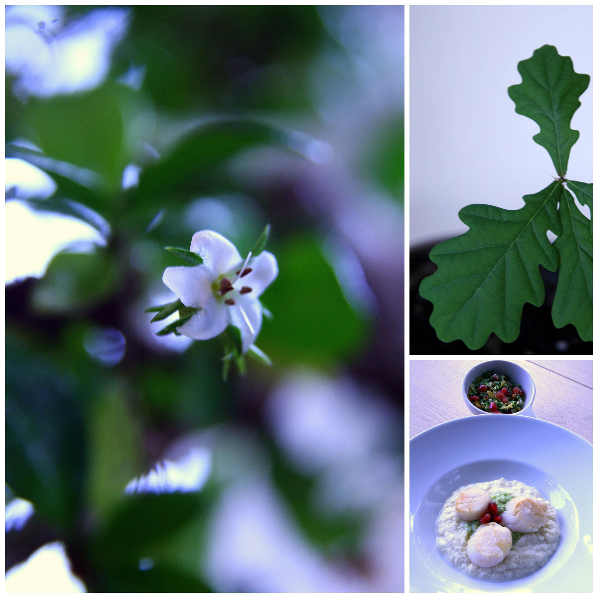 Chou fleur & brocoli en cru et cuit - Saint-Jacques snackées, taboulé à la grenade