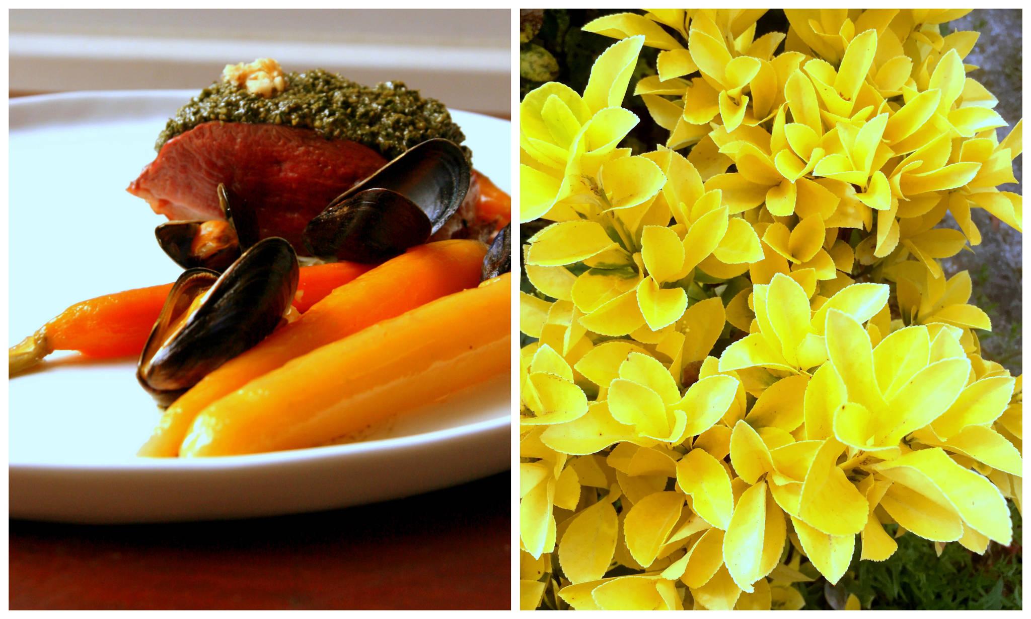 Terre & mer d'Aquitaine - Magret au pesto de fanes de carottes des sables et aux noix du Périgord, moules de bouchot au Lillet, carottes glacées