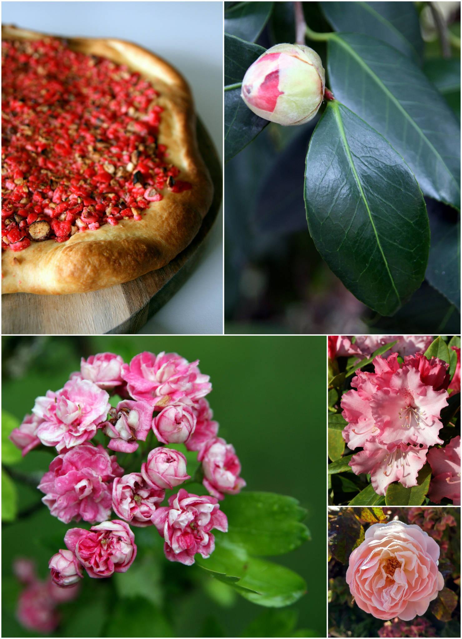 Galette briochée aux pralines roses
